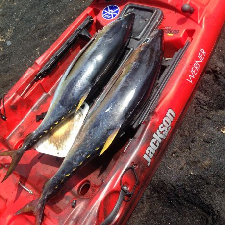 Ahi save the day: 20 and 26 lbs.