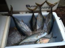 Four of a kind, small kine ahi, for 119 points.