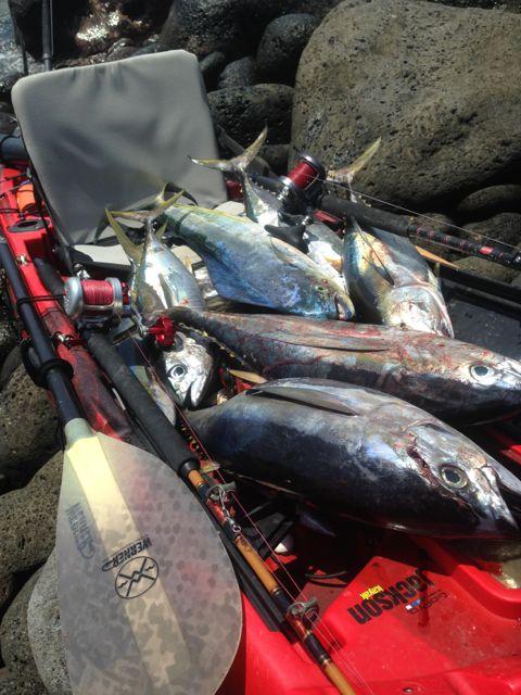 Day 12:  little ahi (yellow fin tuna) and a mahimahi.